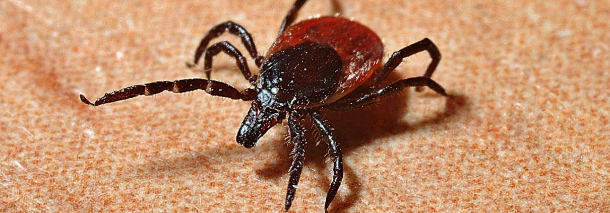 ticks, lyme disease, and you